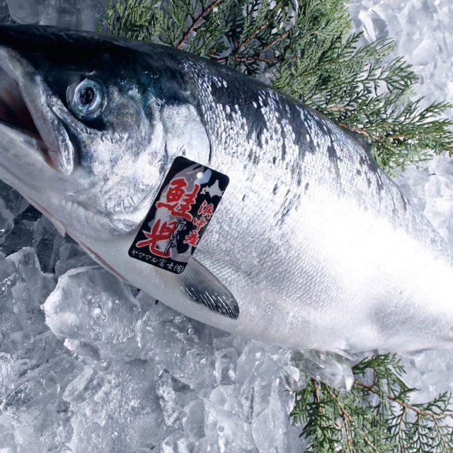 鮭児・幻の鮭とは?