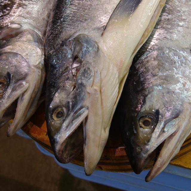 時鮭・トキシラズを食べてみてください。